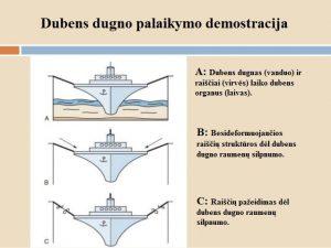 Dubens dugno raumenų stiprinimas  Praktinės rekomendacijos